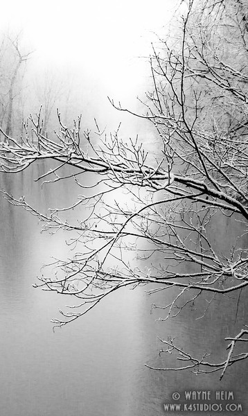 Frosted Tree - Black & White Photography by Wayne Heim