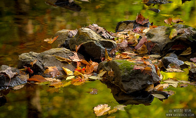 Rocks in a Stream    Photography by Wayne Heim