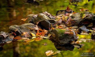 Rocks in a Stream    Photography by Wayne Heim