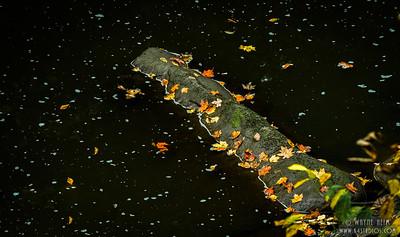 Leaves on Log   Photography by Wayne Heim