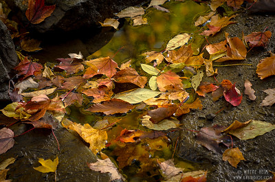 Autumn Leaves    Photography by Wayne Heim