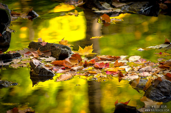 Leaf Dam    Photography by Wayne Heim