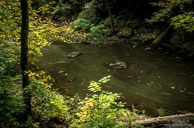 Woodland Stream   Photography by Wayne Heim