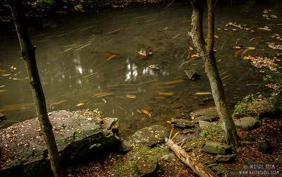 Fish Sticks    Photography by Wayne Heim
