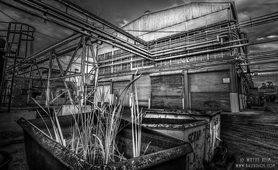 Growing Weeds - Black  & White Photography by Wayne Heim
