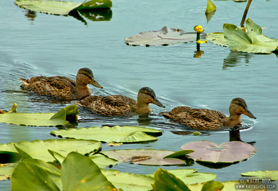 Follow the Leader    Photography by Wayne Heim