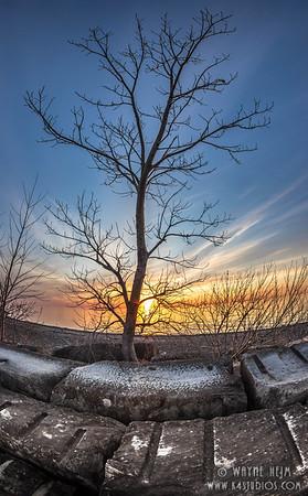 Tree at Sunset   Photography by Wayne Heim