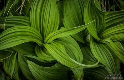 Green Texture   Photography by Wayne Heim