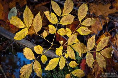 Gold -  Photography by Wayne Heim