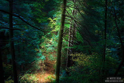 Forest Path. Photography by Wayne Heim