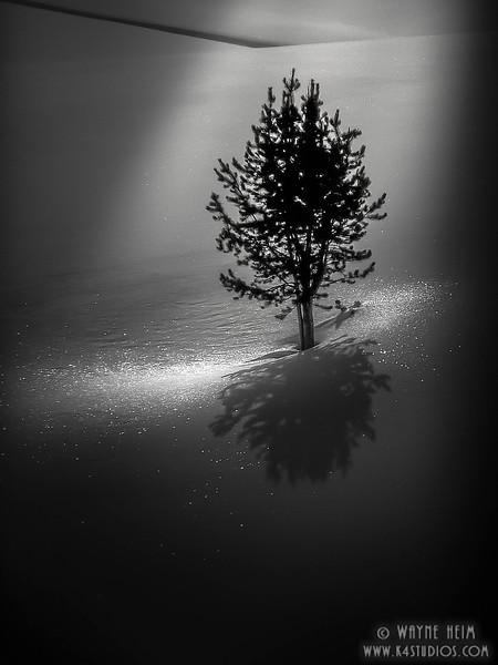 Crystal - Black & White Photography by Wayne Heim