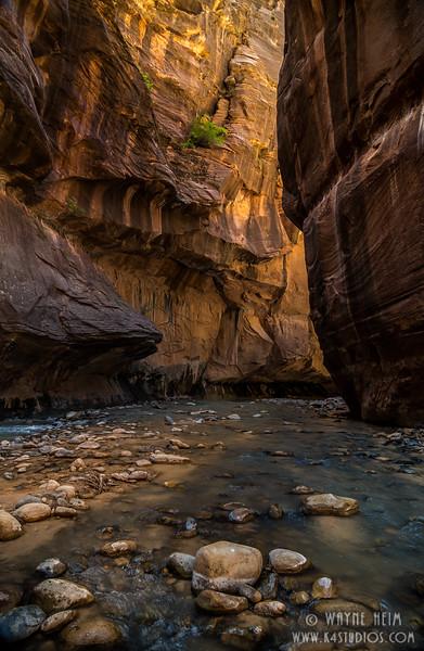 Narrows Zion   Photography by Wayne Heim
