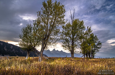 Young Trees    Photography by Wayne Heim