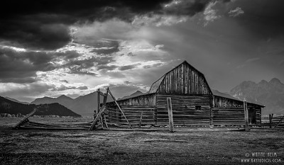 Still Standing in Black & white    Photography by Wayne Heim