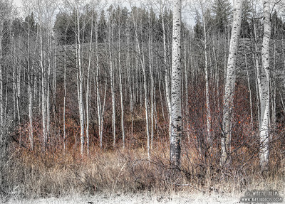 Aspen Fall    Photography by Wayne Heim
