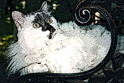 Our late cat CeCe.
