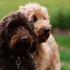 Bruno & Archie