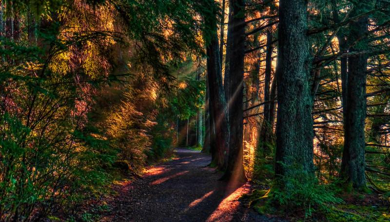 Park Trail 12-4-14
