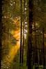 Golden Rays-Toon