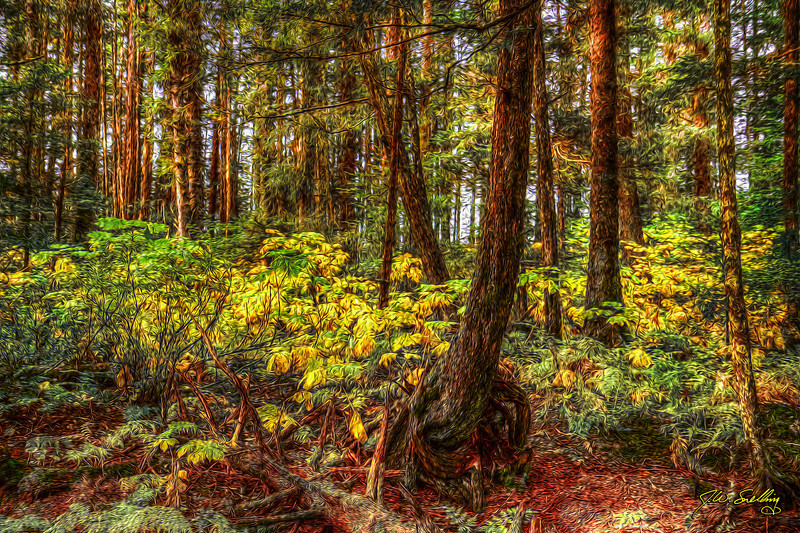 Autumn Forest10-1-11 stylized
