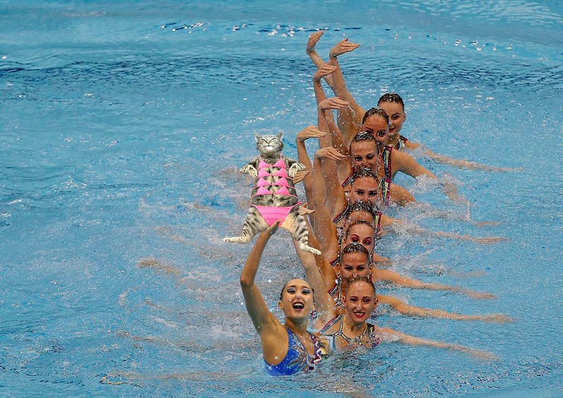 Swimming- European Aquatics Championships- London, Britain, 9/5/2016. France's team competes during the team technical final of the synchro event.                REUTERS/Mattew Childs   TPX IMAGES OF THE DAY