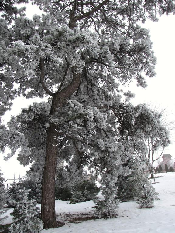 As seen in  Geneva, Illinois Park District <br /> Winter 2012 brochure