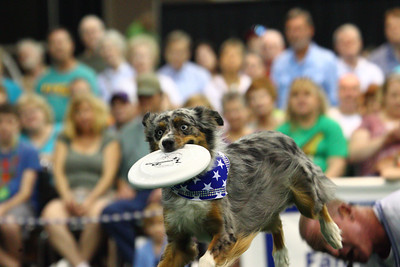 Disc Connected K9 Dog show