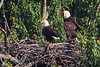 """This weekly """"family portrait"""" shows the eaglet continueing to grow.  They all look very healthy.  May 6 gallery."""