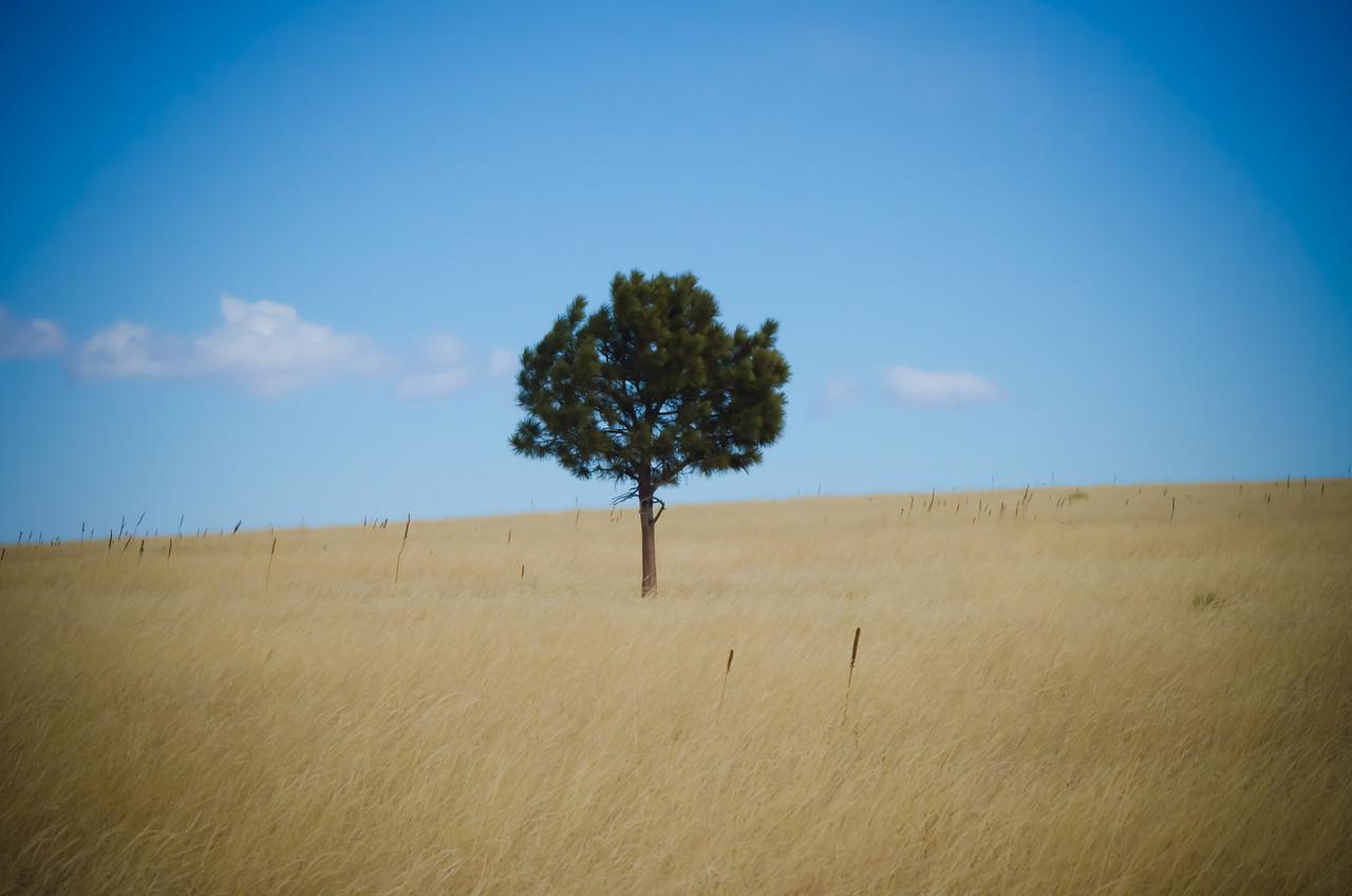 Tree<br /> Near Chatfield State Park, Colorado, February 2011