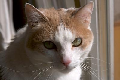 The Taleless Cat
