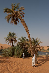 Umalma oasis in the Libyan Sahara