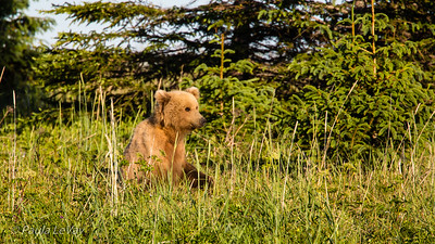 One of her cubs seems undecided whether to flee or fight!