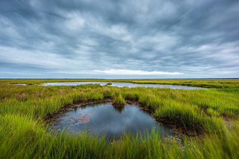 Marsh Moods