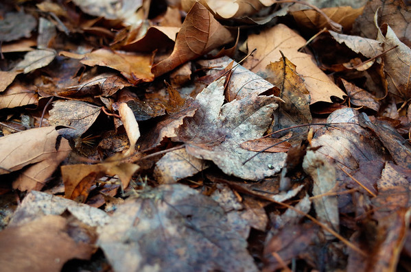 Dead Leaves and the Dirty Ground
