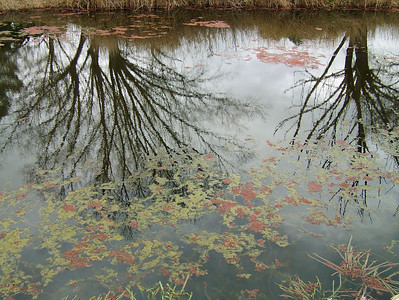 Water blossoms 2, Gunning 2004 28 x 38cm