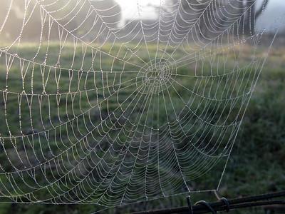 "Cobweb, ""Iambi Park"", Morongla Creek 2009 39 x 52cm"