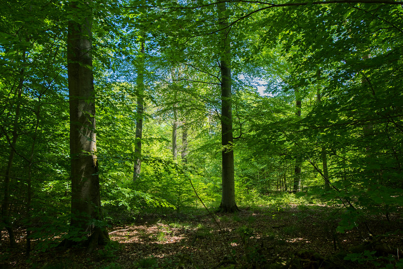 A forest south of Messel, in Hessen, Koberstadt, Germany. © Daniel Rosengren / FZS