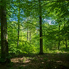 A forest south of Messel, in Hessen, Koberstadt, Germany. © Daniel Rosengren