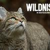 Wildkatze + Logo weiß (Facebook, 472x394 Pixel)