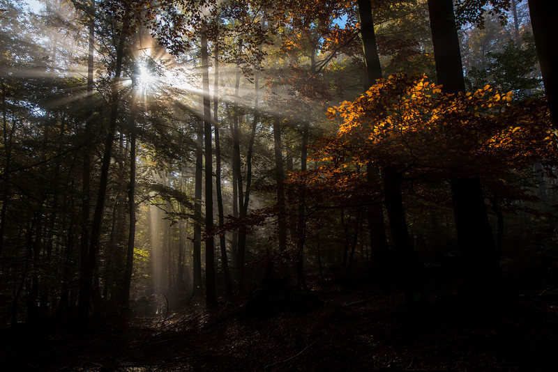 Sun rays in the morning fog in Germany. © Wildnis-in-Deutschland.de, Daniel Rosengren