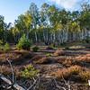 Blick auf Birkenwald im Wildnisgebiet Heidehof, Brandenburg<br />  © Tilo Geisel/Stiftung Naturlandschaften Brandenburg