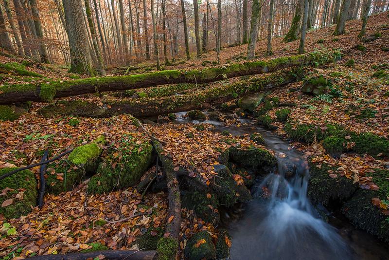 Forest in Hessen (2015)