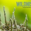 Flechte + Logo grün (Facebook, 472x394 Pixel)