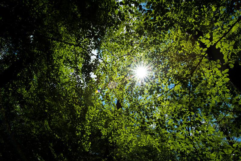 Beech canopy in the forest reserve, Sitzwiesen von Darmstadt-Arheilgen, Kranichstein, in Hessen, Germany. © Daniel Rosengren