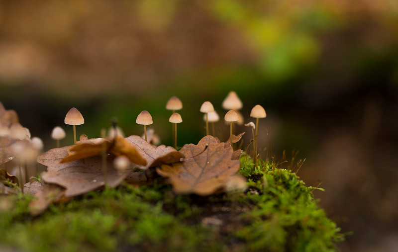 Mushrooms in a Beech forest in Alsberg, Hessen, Germany. © Daniel Rosengren