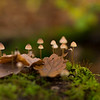 Mushrooms in a Beech forest in Alsberg, Hessen, Germany. © Daniel Rosengren / FZS
