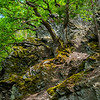 Oak trees growing on porous rocks in the Wispertaunus, Hessen, Germany. © Daniel Rosengren