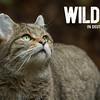Wildkatze + Logo weiß (5235x3333 Pixel, 300dpi)