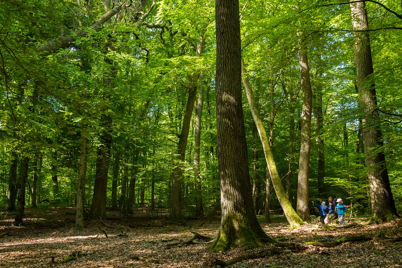 Two boys playing in a forest reserve, Hegbachaue bei Messel, Koberstadt, in Hessen, Germany. © Daniel Rosengren