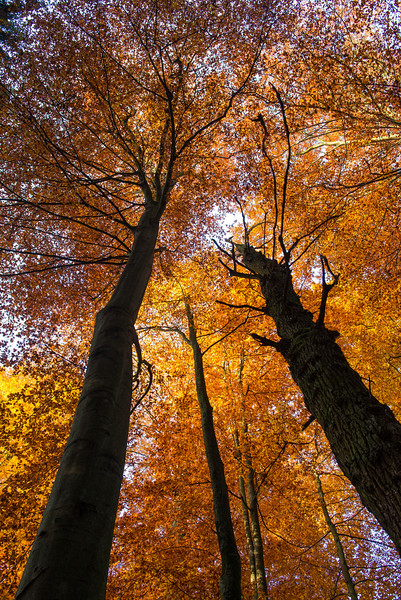 A beech forest Germany. © Wildnis-in-Deutschland.de, Daniel Rosengren